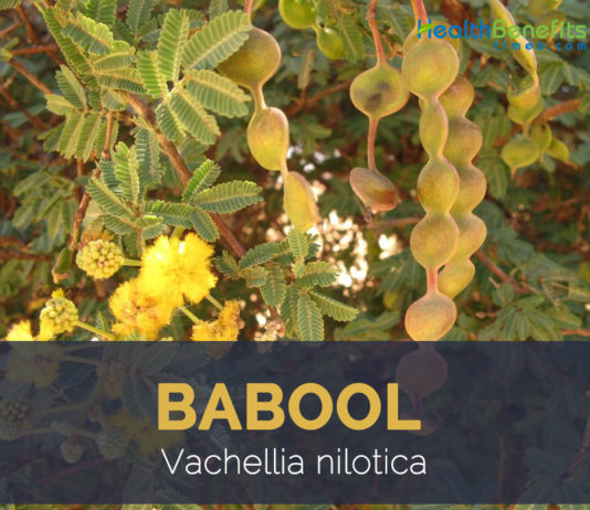 Babool facts and health benefits