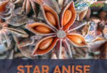 Star anise facts and benefits