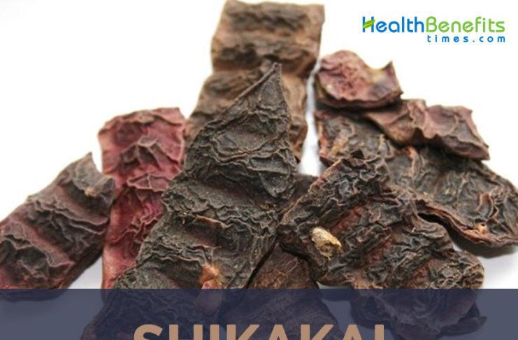 Uses and benefits of Shikakai