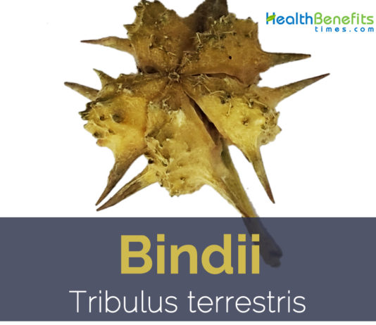 Bindii facts and health benefits