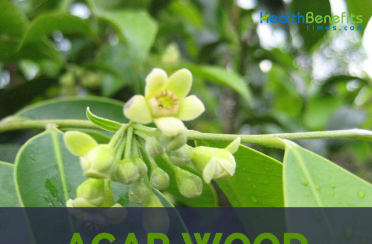 Agar wood facts and health benefits
