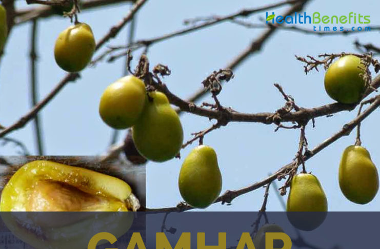 Gamhar facts and benefits
