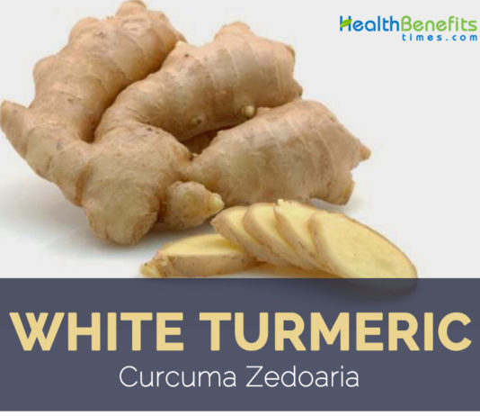 White turmeric facts and health benefits