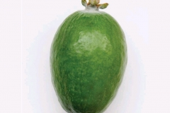 Feijoa-fruit-single