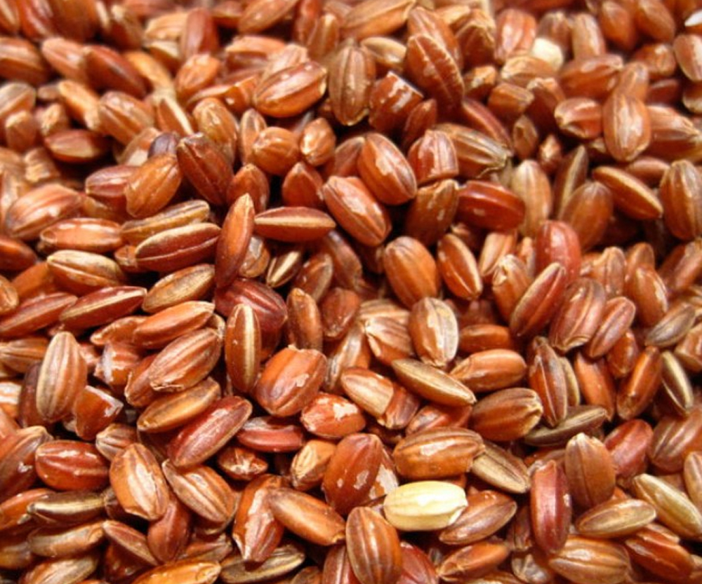 Short-Grain-Red-Rice