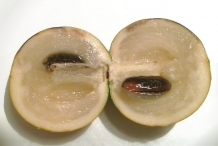 Half-cut-Abiu-fruit