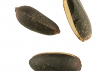 Seeds-of-Abiu-fruit
