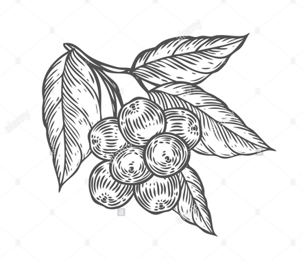 Acai-berry-sketch