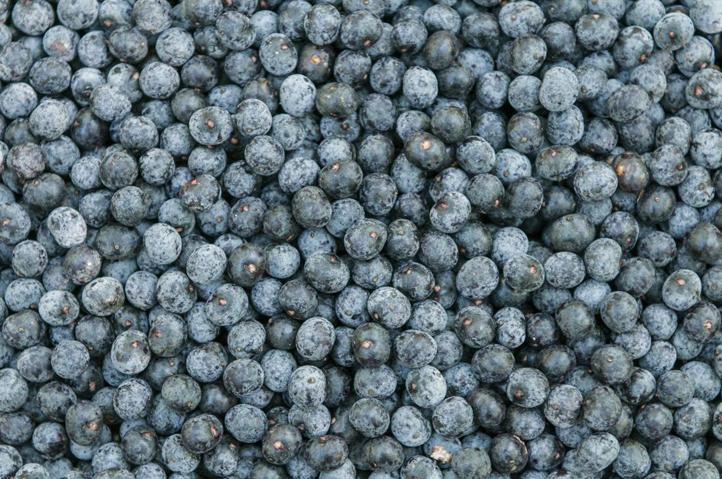Harvested-Acai-berries