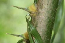 African-oil-palm-stem