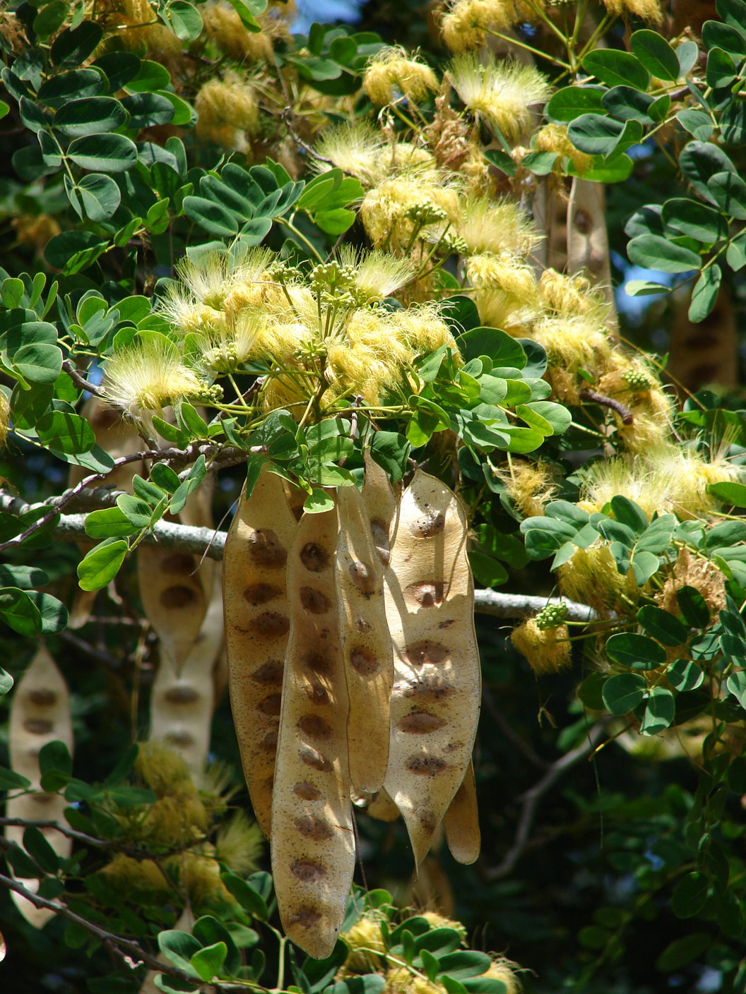 Pods-leaves-and-flowers