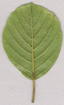 Underside-view-of-leaf