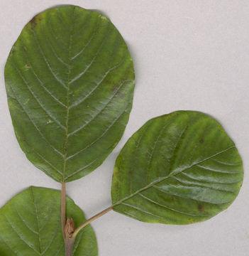 Upper-surface-of-Leaf