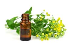 Alecost-essential-oil
