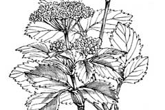Sketch-of-Alexanders