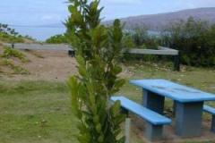 Small-Alexandrian-Laurel-Plant