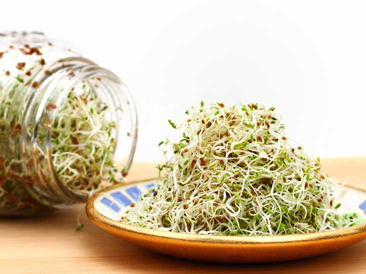 Alfalfa-sprouts-3