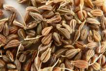 Anise-seeds