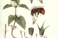 Illustration-of-Archangel