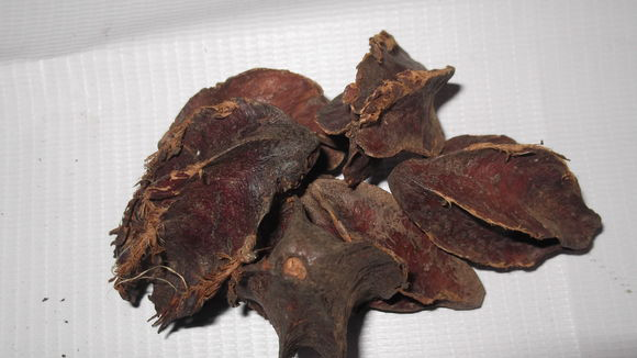 Dried-Seeds-of-Arjun-Tree