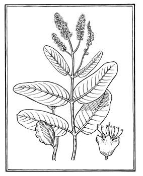 Sketch-of-Arjun-tree