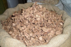 Aromatic-ginger-dried-roots