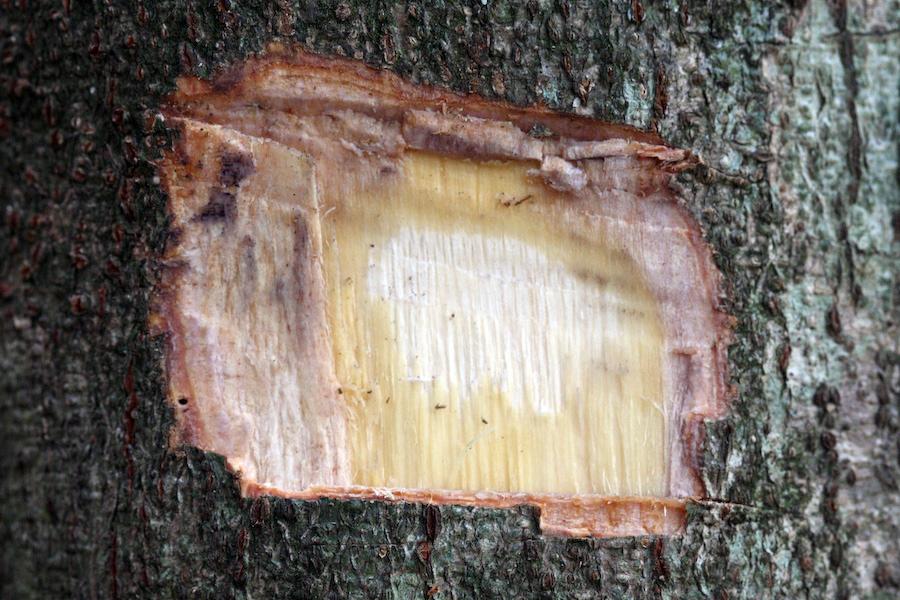 Bark-cut