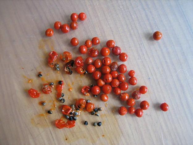Asparagus-seeds