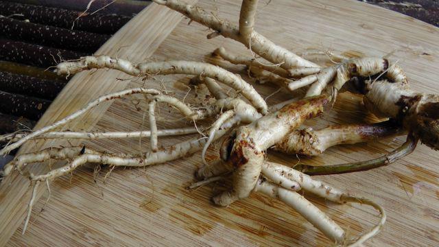 Fresh-Astragalus-root