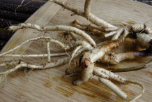 Fresh-Astragalus-root