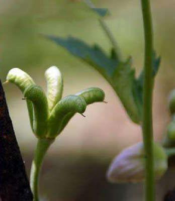 Fruits-of-Ativisha