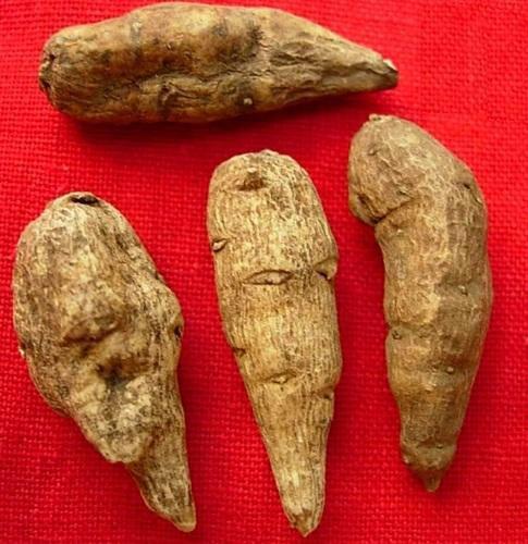 Roots-of-Ativisha
