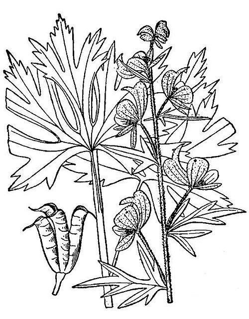 Sketch-of-Ativisha