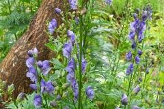 Ativisha-Plant