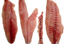 Atlantic-Croaker-fillets