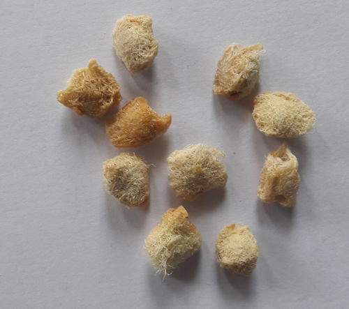 Bael-fruit-seeds
