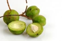 Unripe-Baheda-fruit