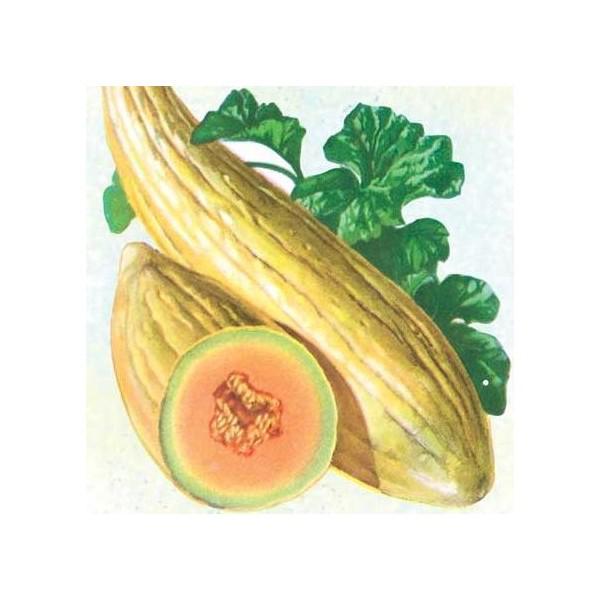 Sketch-of-Banana-Melon