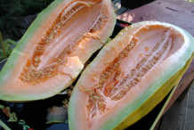 Banana-Melon-Seeds