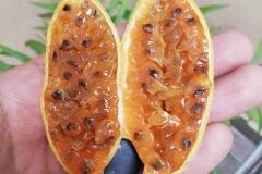 Half-cut-Banana-Passionfruit