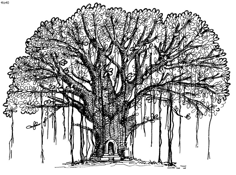Sketch-of-Banyan-Tree