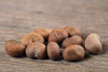 Seeds-of-Baobab-plant