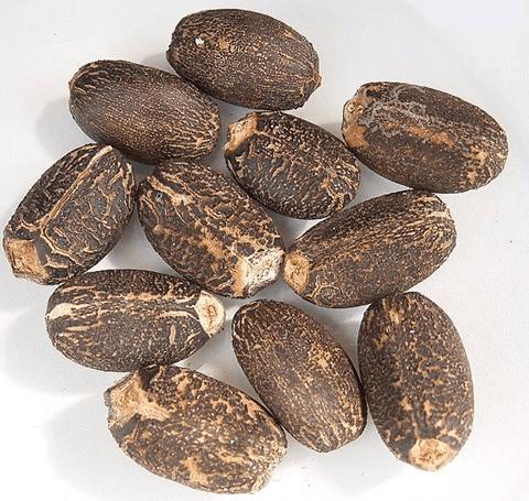 Seeds-of-Barbados-nut
