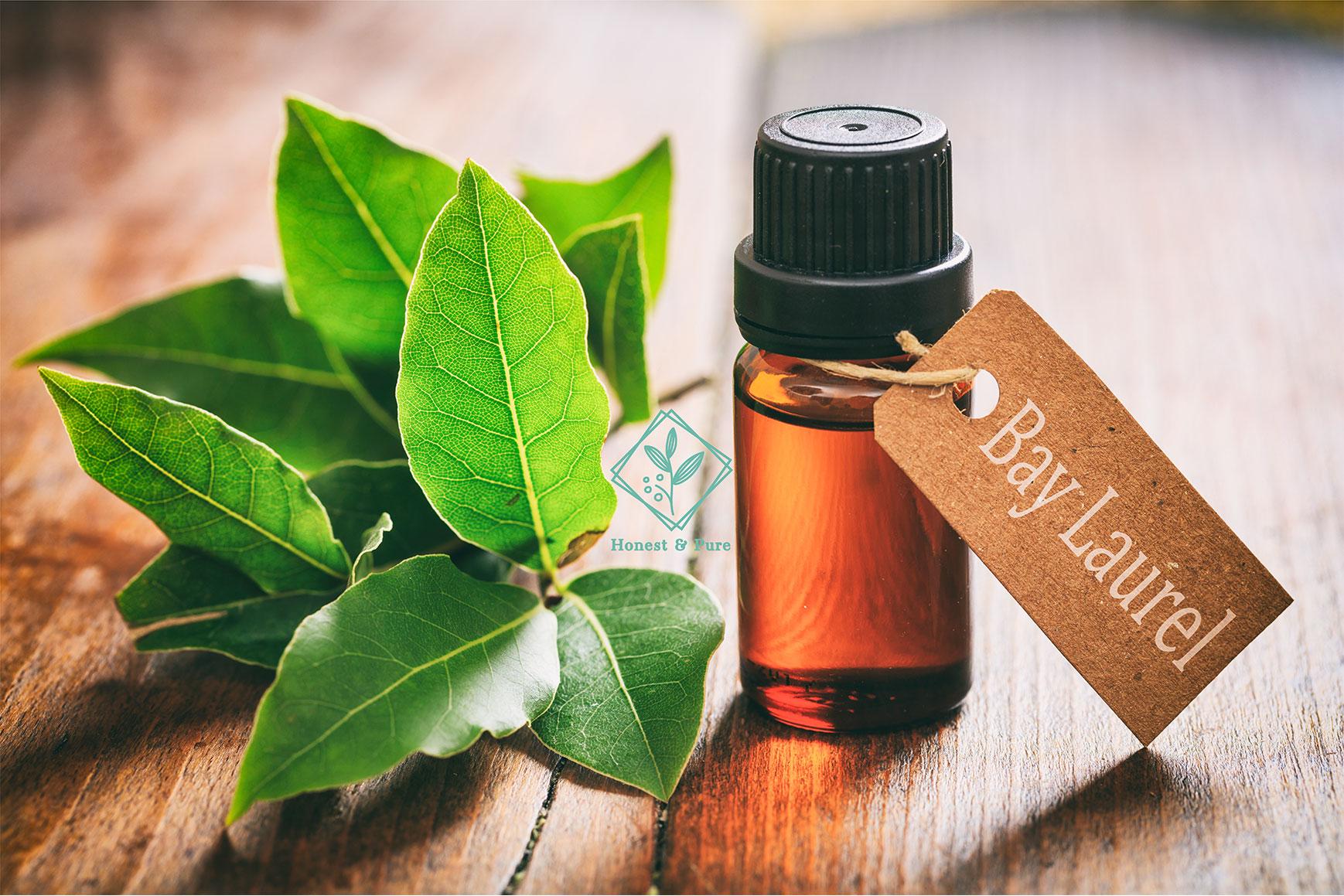 Bay-Laurel-essential-oil