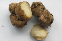 Rhizome-of-Bengal-Ginger