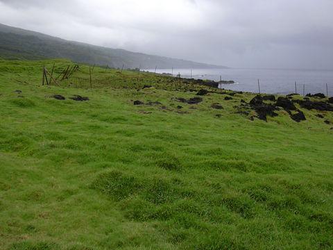 Bermuda-Grass--growing-wild