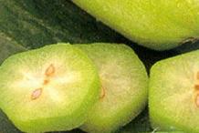 Slices-of-Bilimbi