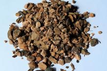 Dried-Bistort-root