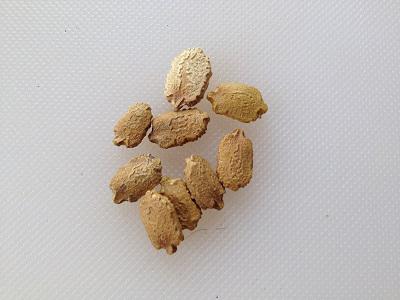 Seeds-of-Bitter-gourd