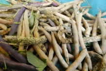 Dried-pods-of-Black-bean